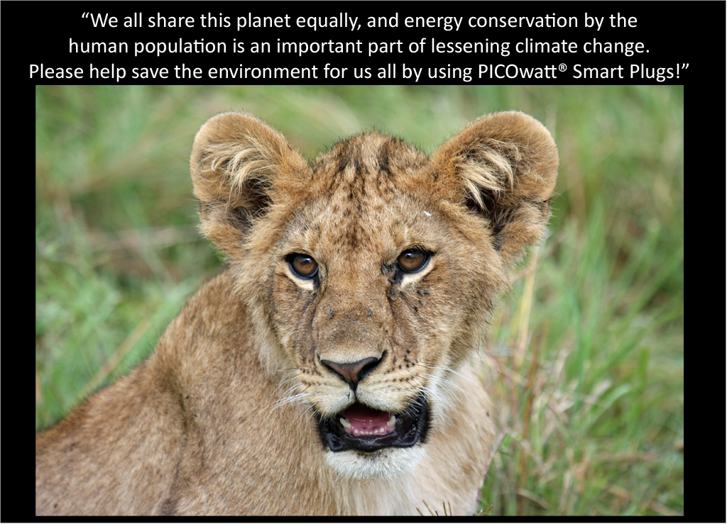Lion cub talks about the PICOwatt® Smart Plug
