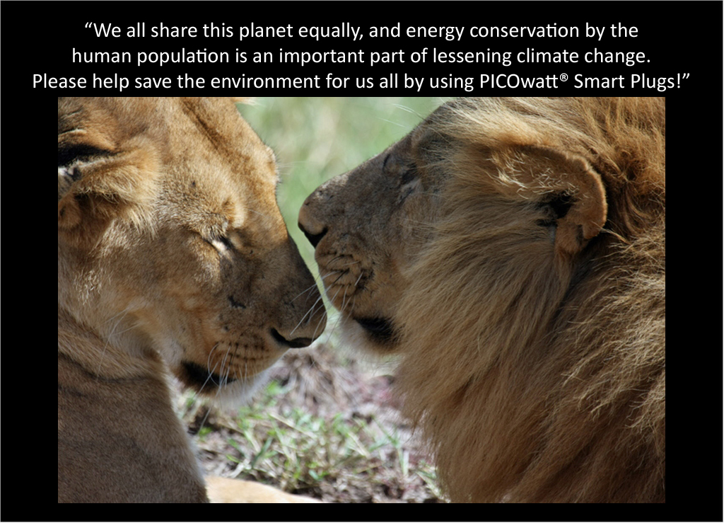 Lions talk about the PICOwatt® Smart Plug