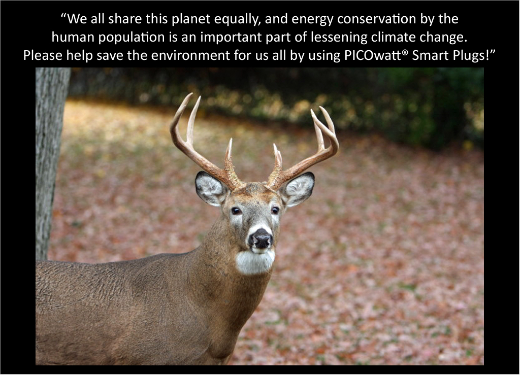 Male White Tail Deer talks about the PICOwatt® Smart Plug